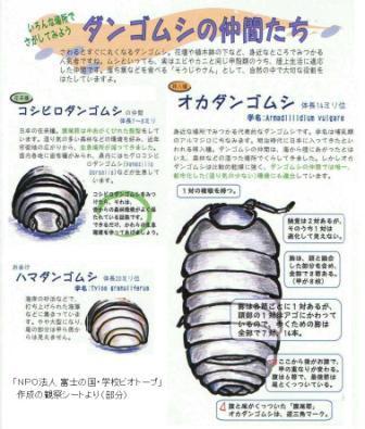 種類 ダンゴムシ